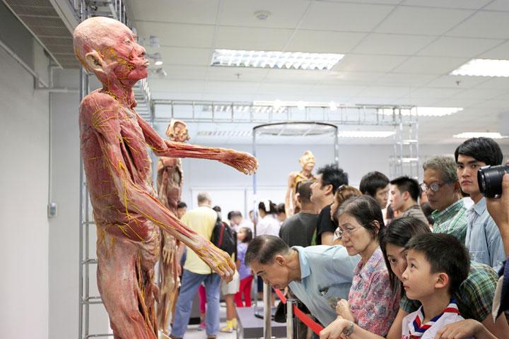 The Museum Of The Human Body  U2013 Cu100